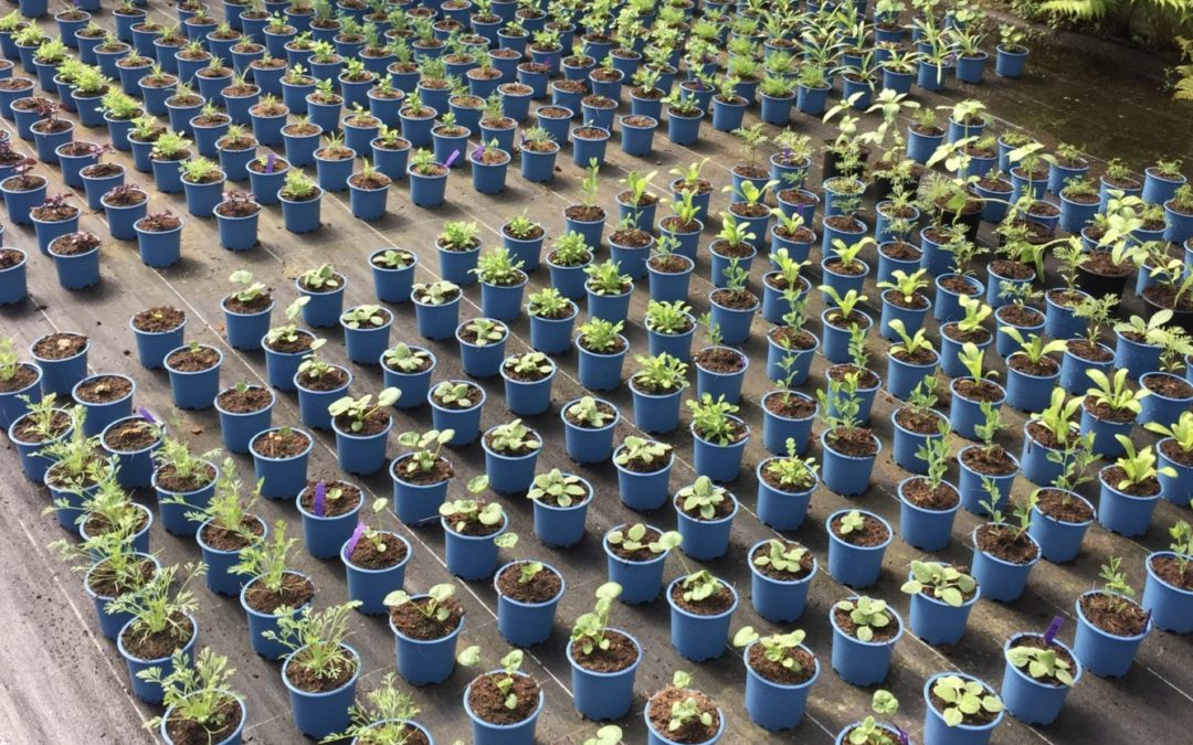 Le BLUE POT: un pot recyclé et recyclable